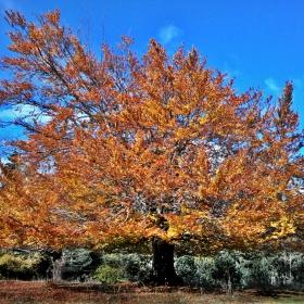 Спомен от есента