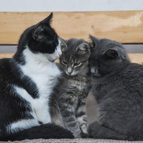 Мац ...I