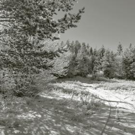 Зимни разходки