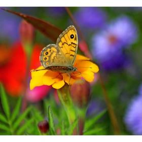 В цветната градина