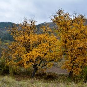 Есенна премяна