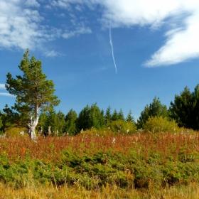 Витошки пейзаж 1