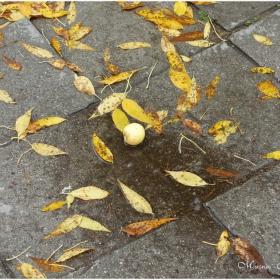 Жълто есенно