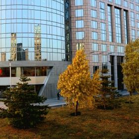 Есен в големия град