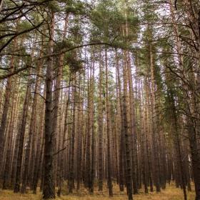 Пред гората ние сме нищожни