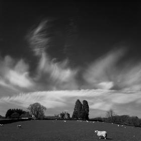Пейзаж с овца