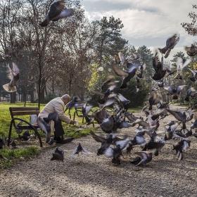 Приятелят на птиците