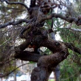 Дърво