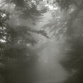 Надясно с мъглата