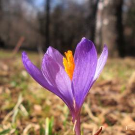 Пролет иде