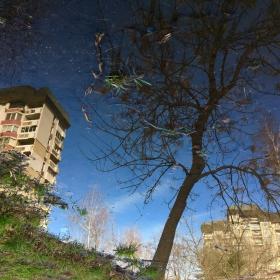 Отражението в една локва !