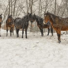 Снежни коне