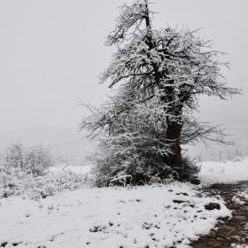 Зима е !