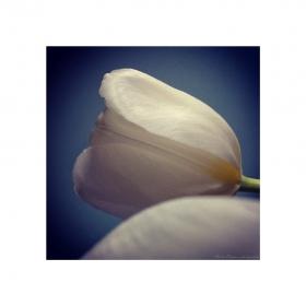 Въздишка - Усещане за пролет -