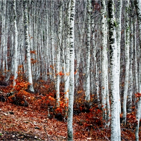Из леса
