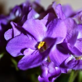 В лилаво