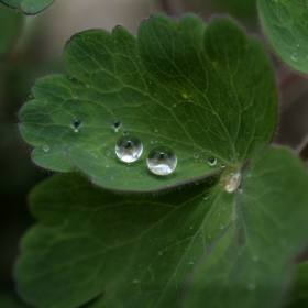 капка дъжд