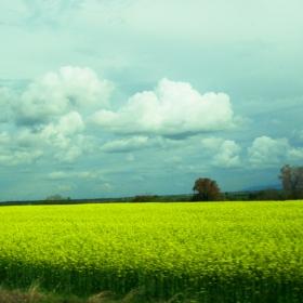 асеновградско поле