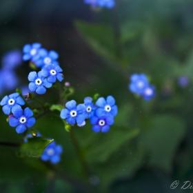 Синя магия