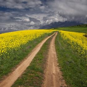 Път в жълтото