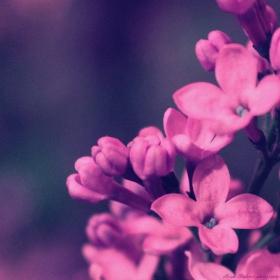 Парченце пролет - С дъх на люляк и любов -