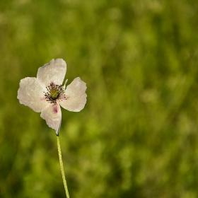 Цветен минимализъм