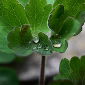 капки от дъжда 2