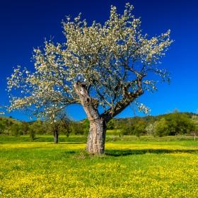 Слънчев пролетен ден