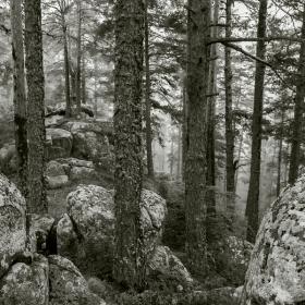 Родопски гори