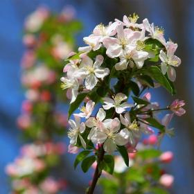 Пролетно очарование