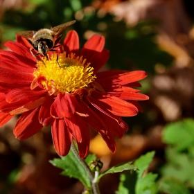 Нектар и амброзия