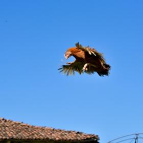 аз не съм пиле аз съм орел