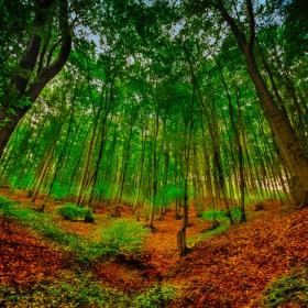Магическата гора