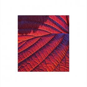 Червено листо