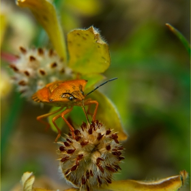 Любопитството на един бръмбър