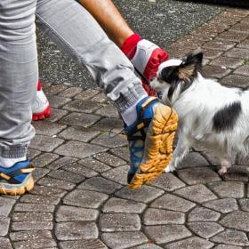 С левия крак...  и лапа  - ходооооом марш!