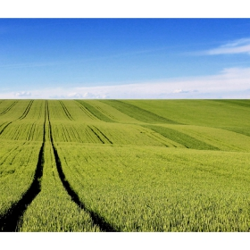 През полето пътят води...