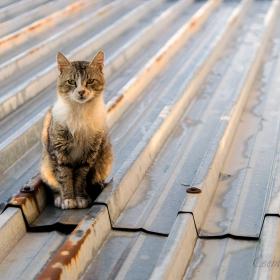 Котка на ламаринен покрив