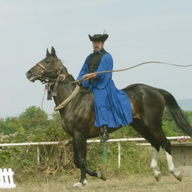 65 години порода Дунавски кон - 1