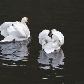 Две големи бели птици пренебрежително ми обърнаха гръб...