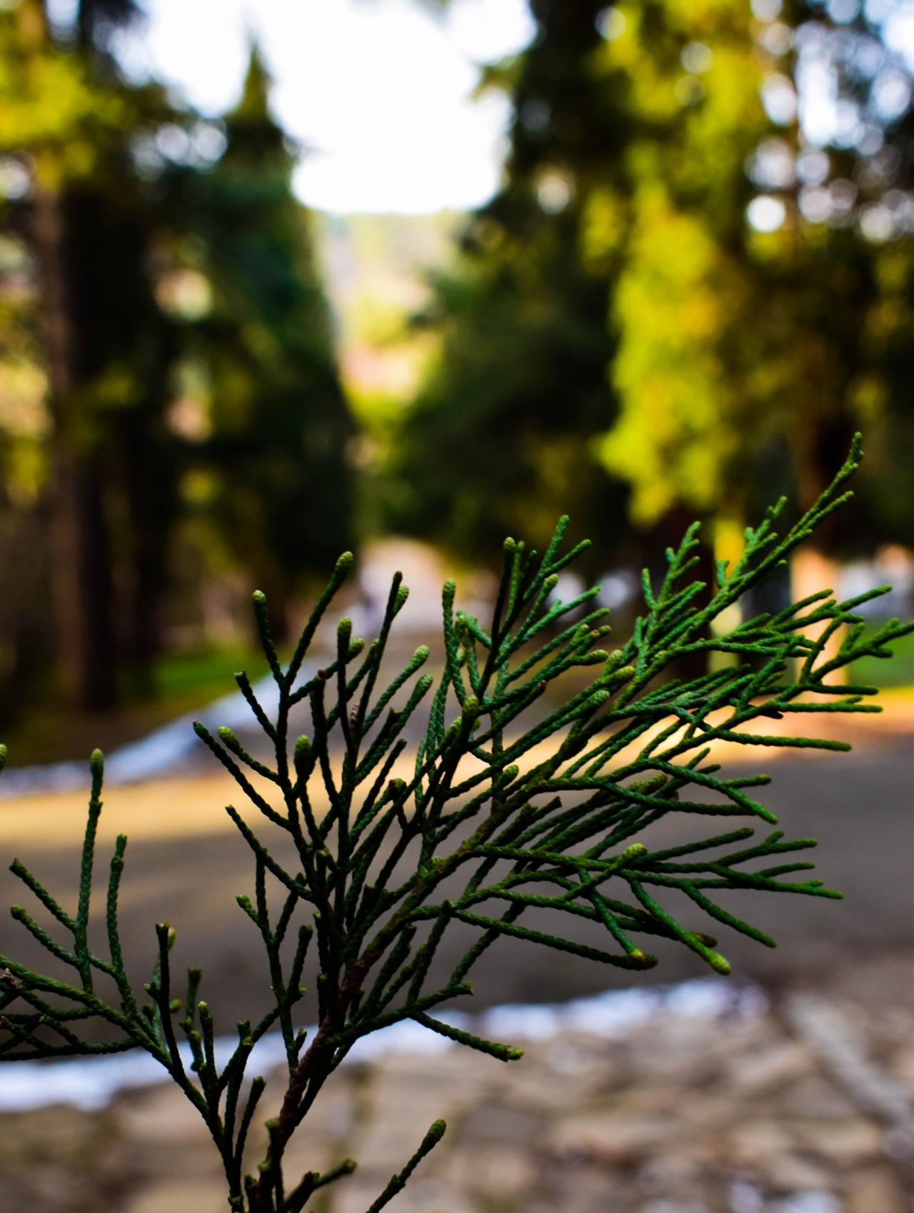 Спокойствие сред гората