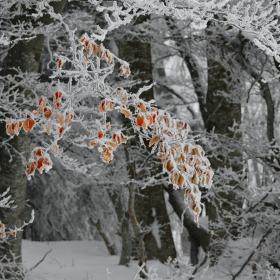 Дантелената гора