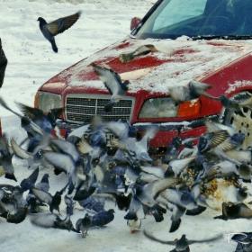 Да нахраниш гълъбите