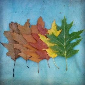 6 нюанса есен