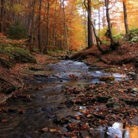 Красотата на есента