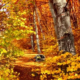 В златната гора