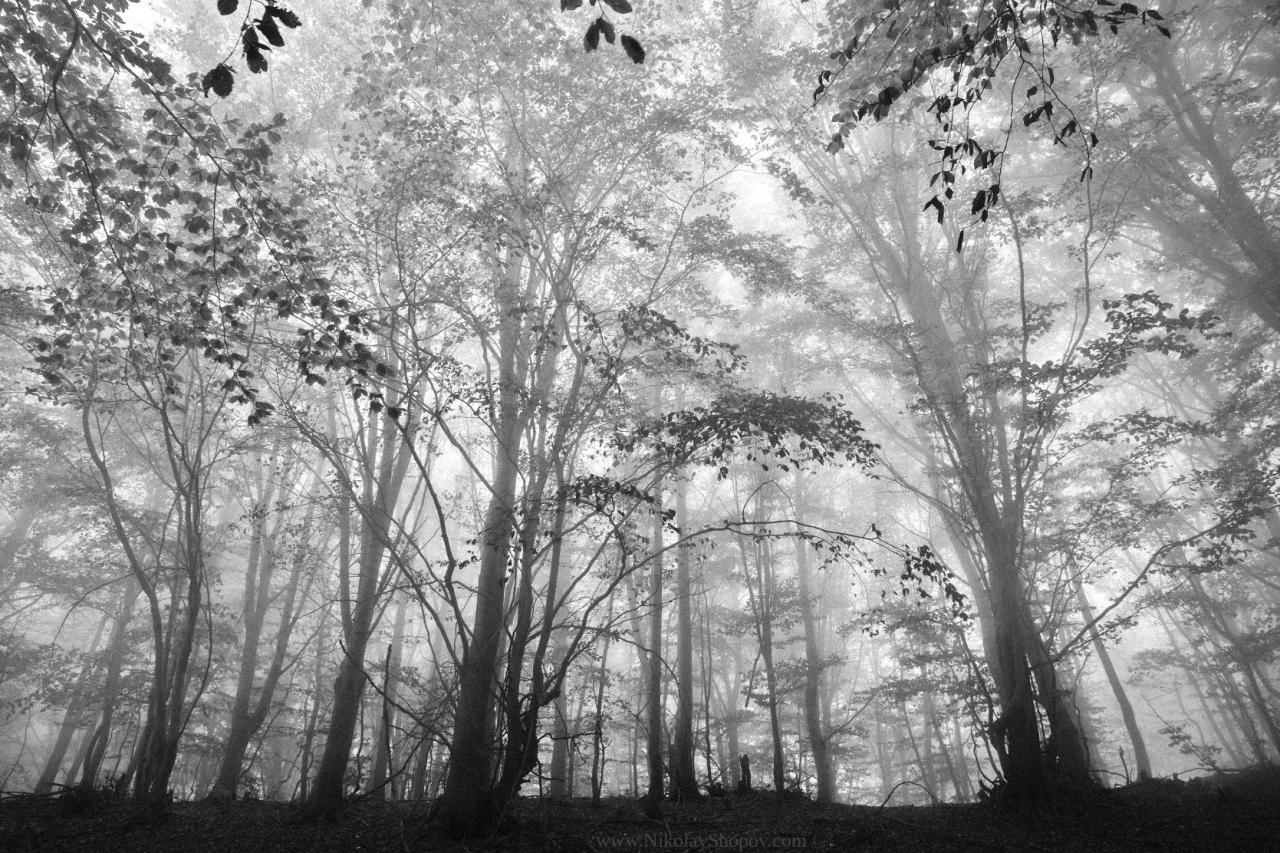 Мъглива гора