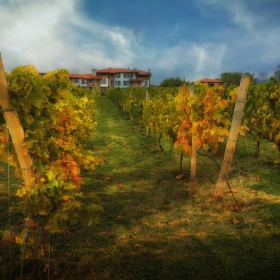 Crazy Wine - Bulgarian Autumn 1