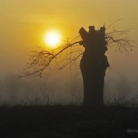 Мъглив ден