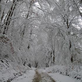 Зимна пътека